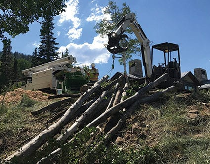 parkcity-tree-removal-canyon-cutters