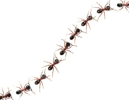 pest-elimination-park-city-ant-removal