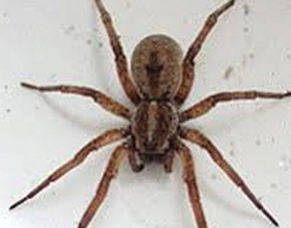 pest-elimination-park-city-wolf-spider-removal