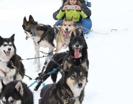 luna-lobos-dog-sledding-park-city-tours