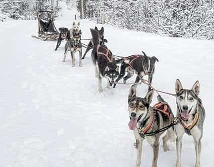 luna-lobos-dog-sledding-utah