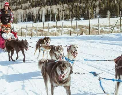 park-city-luna-lobos-dog-sledding-tours