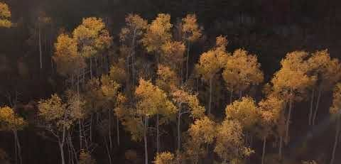 Best of Fall Colors 2019 by Drew Neff @nephland