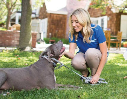 park-city-invisible-fence-for-pets-dog-training